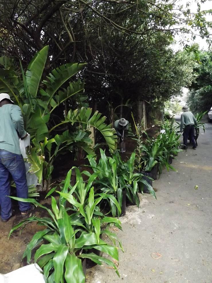 Verge Garden:   by Simon Clements: Garden & Landscape Design