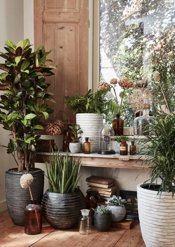 Capi Nature Indoor - Mix van potten:   door Capi Europe, Landelijk
