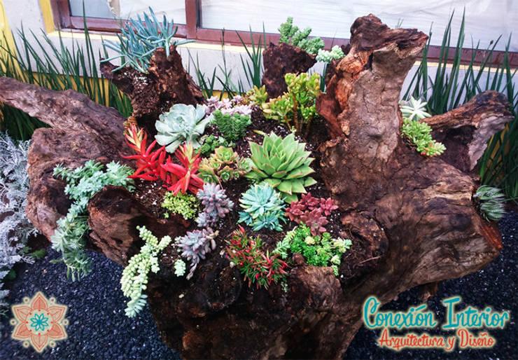 Tronco en jardin con diseño de plantas suculentas: Jardines de estilo rústico por Conexion Interior, Arquitectura y Diseño