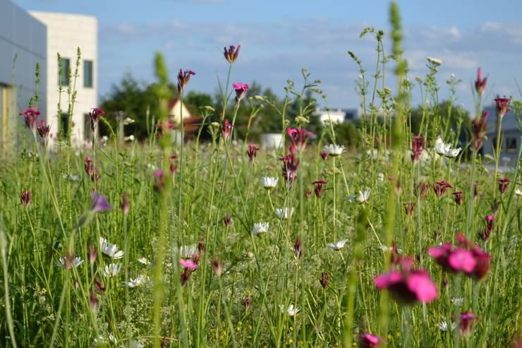 Dach zielony - kwietna łąka: styl , w kategorii  zaprojektowany przez Piotr Wolański APK Dachy Zielone