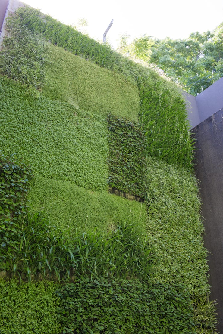 Outdoor Vertical Garden on Kloof Road:  Houses by Living Green Walls