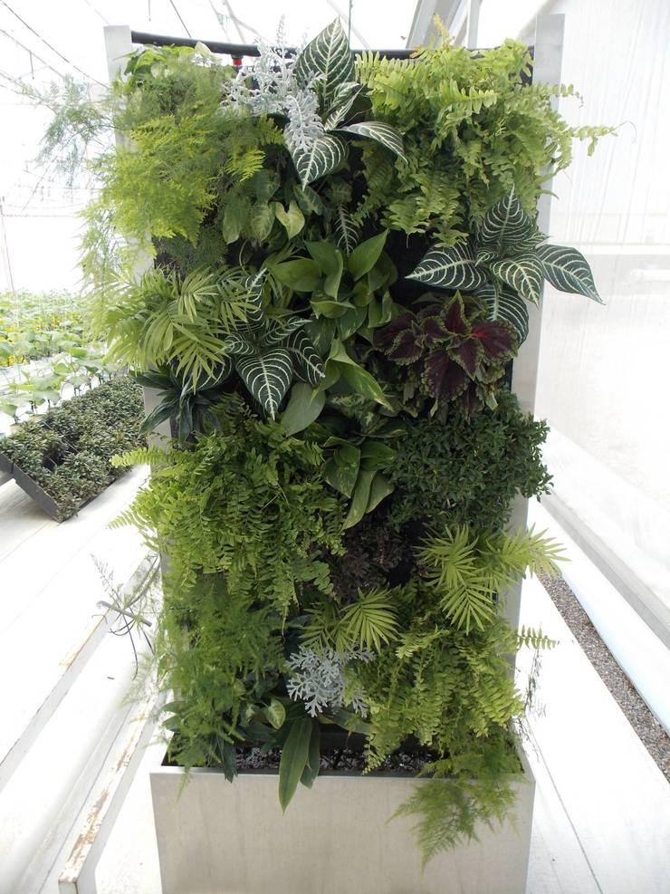 Jardinera: Jardines de estilo  por Arquitectura Orgánica Viviana Font