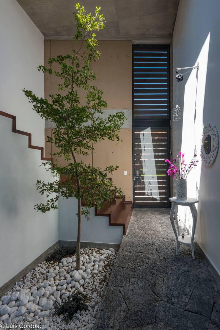 Arbol interior el corazón de la casa Pasillos, vestíbulos y escaleras modernos de arquitecturalternativa Moderno