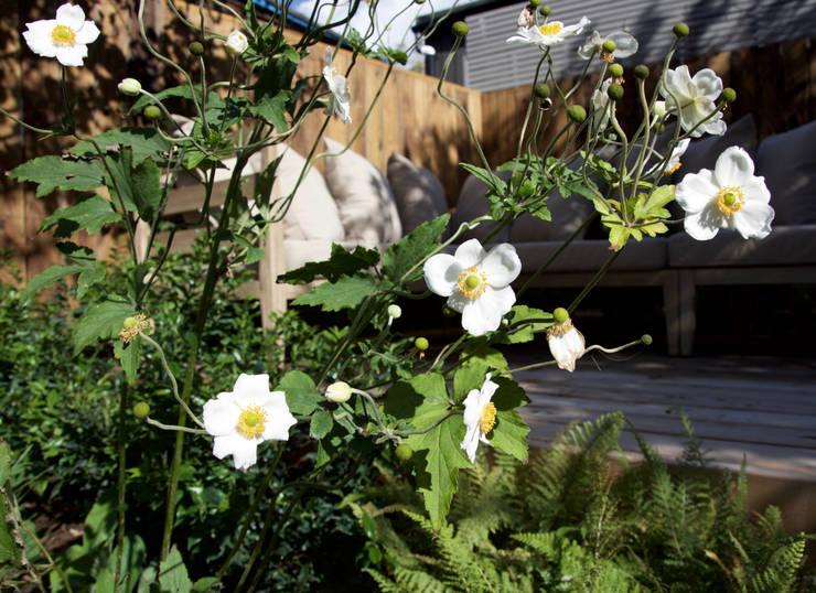 Anemone x hybrida 'Honorine Jobert':  Garden by Tom Massey Landscape & Garden Design