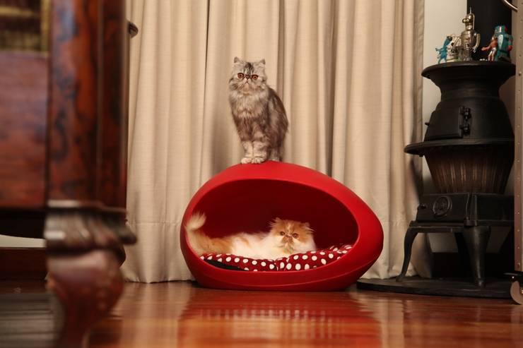 Casa para Gatos elaborada con Plástico 100% Reciclado de Viridis Productos Eco Amigables Moderno Plástico