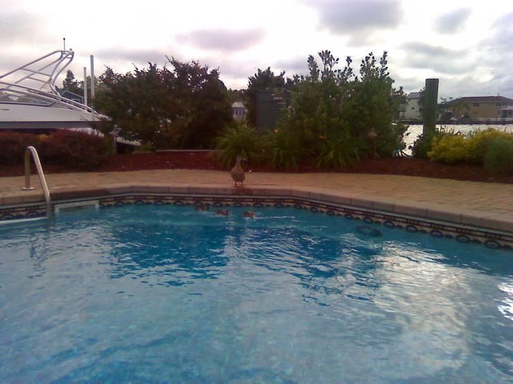 Piscina de Lisa Cinque :  de estilo  por Avel Benapi Services, dba, ABS Pool Patrol