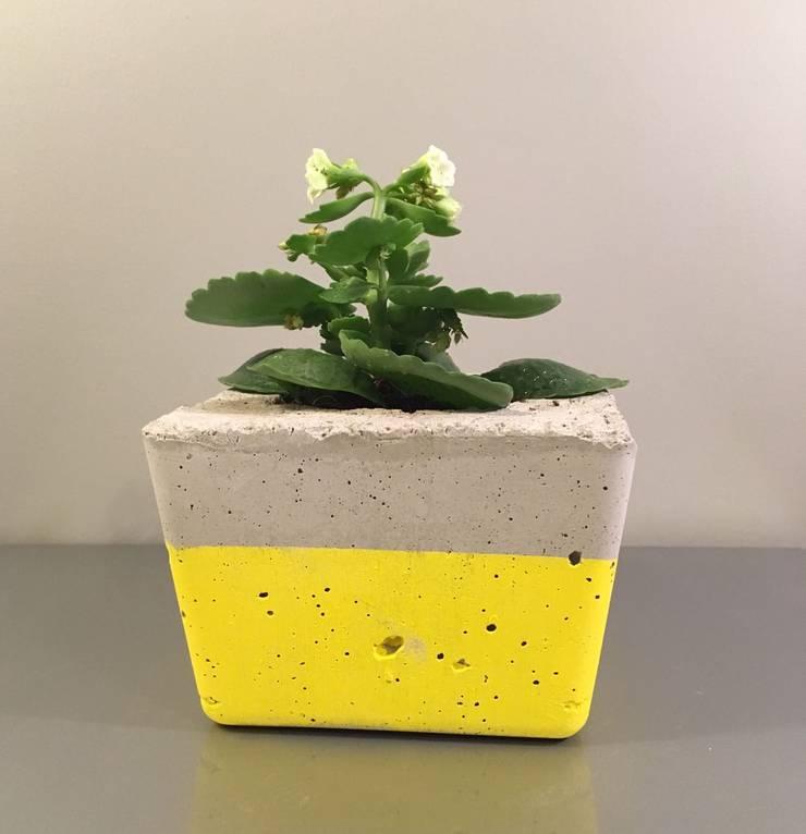 BETONhane – Betonhane aksesuar beton saksı: minimalist tarz , Minimalist Beton