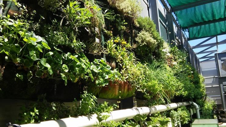 Westin Hotel roof garden in its third summer… flowering!: eclectic  by Vertical Veg (Pty) Ltd, Eclectic
