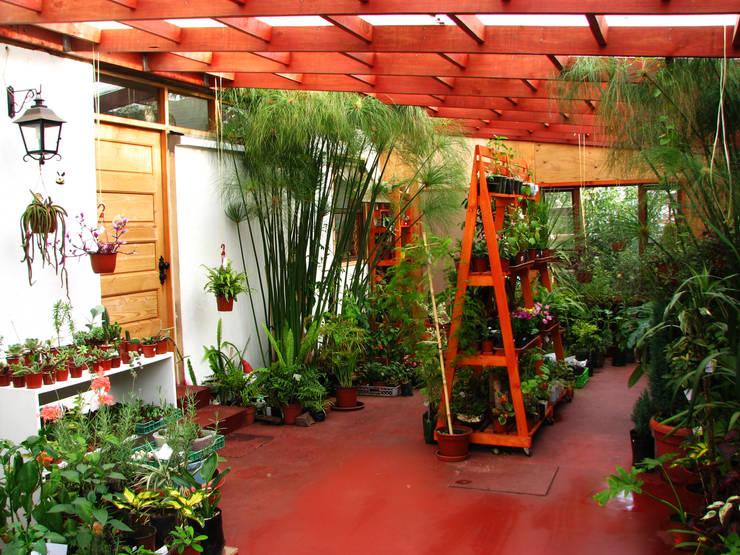 Diseño y Habilitación Local Comercial Jardin Vortice: Jardines de estilo  por Vortice Design Ltda