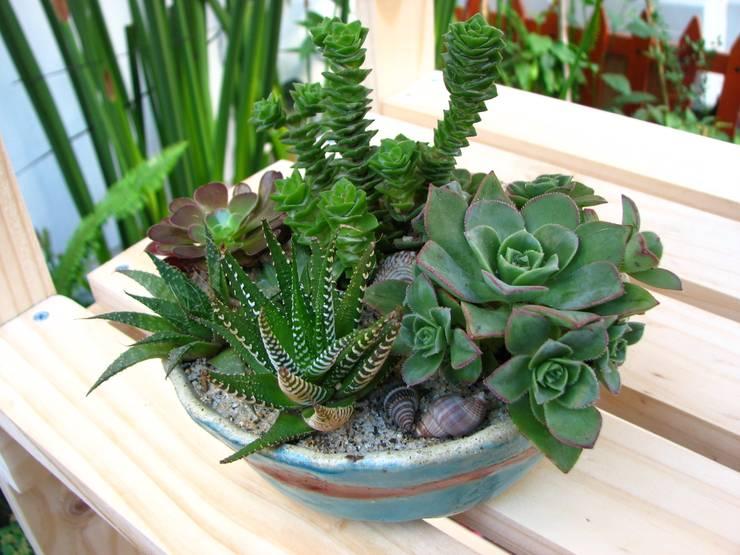 Mini Paisajes de Plantas Naturales: Paisajismo de interiores de estilo  por Vortice Design Ltda