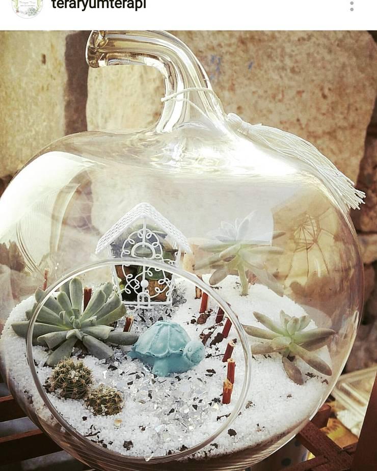 Teraryum Terapi – Kış bahçesi: modern tarz , Modern Cam