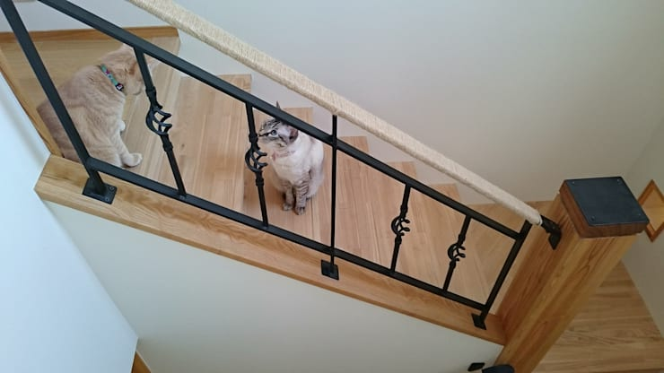 愛犬愛猫家住宅~ジョエルとその仲間たち~: stage Y's 一級建築士事務所が手掛けた廊下 & 玄関です。