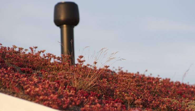 Черный дом с зеленой крышей: Сады в . Автор – СпецПаркДизайн_
