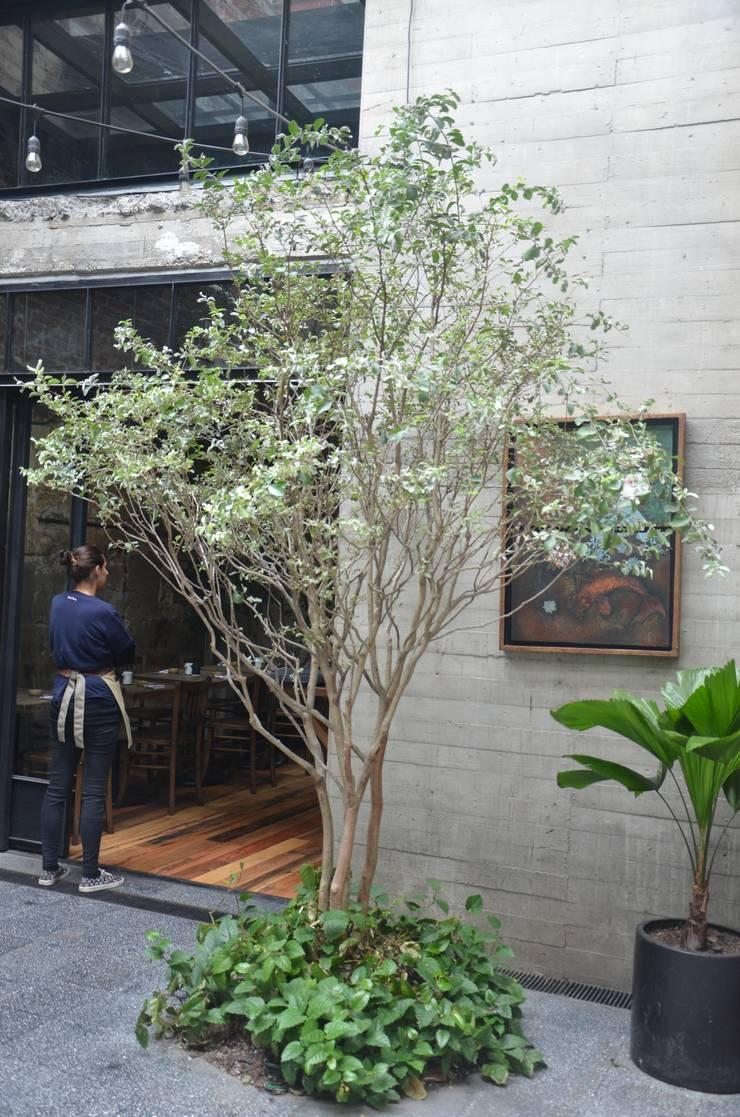 Koku Restaurant:  de estilo  por Regenera Mx - Fábrica Ecológica, Asiático