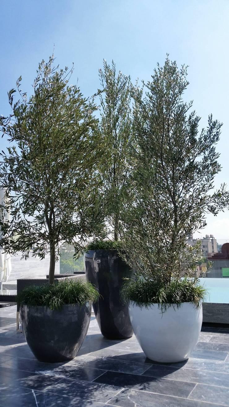 Roof Garden Roma Norte:  de estilo  por Regenera Mx - Fábrica Ecológica, Moderno