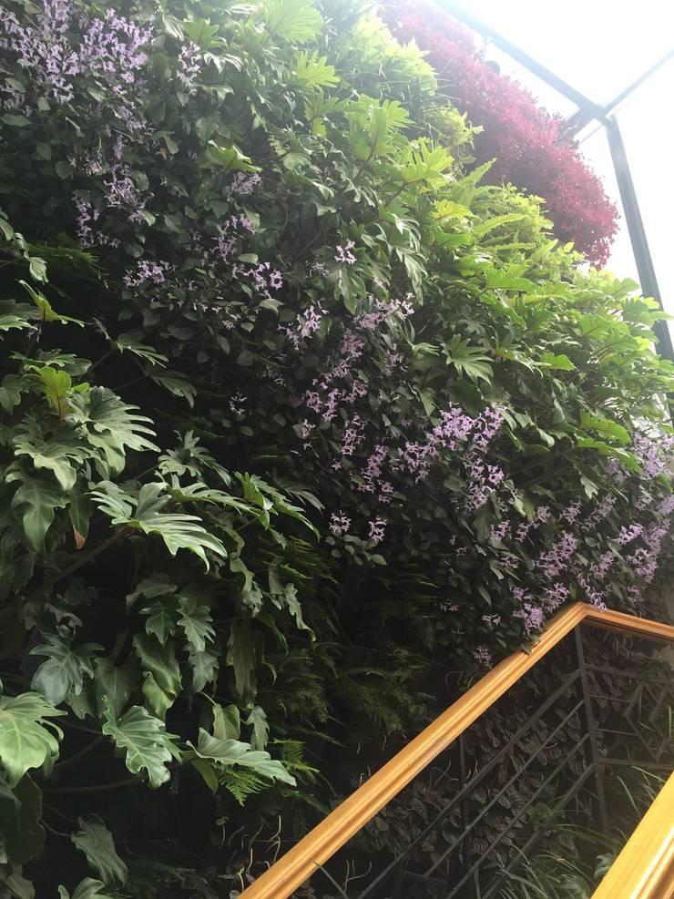 Muro Verde Escandón:  de estilo  por Regenera Mx - Fábrica Ecológica, Clásico