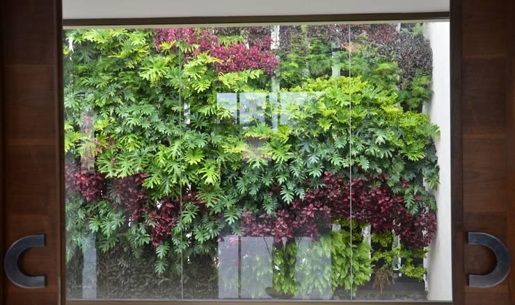 Muro Verde Pedregal Océano:  de estilo  por Regenera Mx - Fábrica Ecológica, Moderno