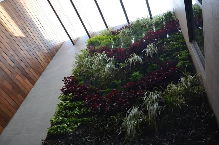 Muro Verde Fuentes del Pedregal :  de estilo  por Regenera Mx - Fábrica Ecológica, Moderno