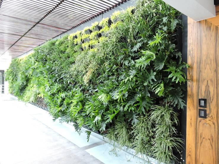 Muro Verde Terranova Tabasco:  de estilo  por Regenera Mx - Fábrica Ecológica, Moderno