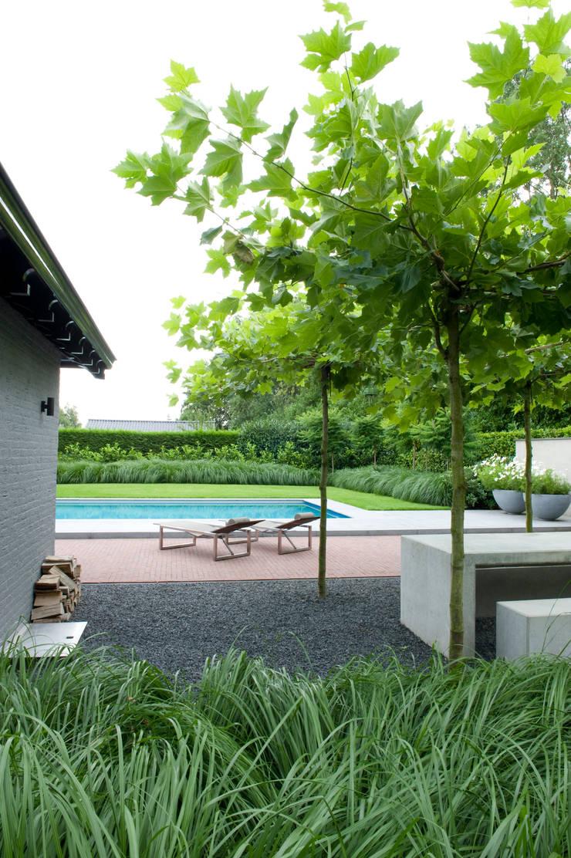 Luxe tuin met zwembad:  Zwembad door Jaap Sterk Hoveniers, Modern