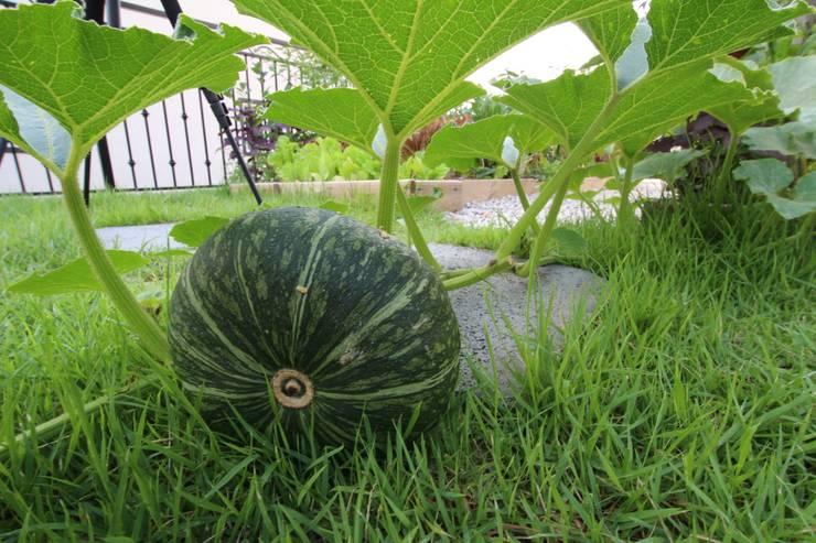 행복한가: 로이하우스의  정원