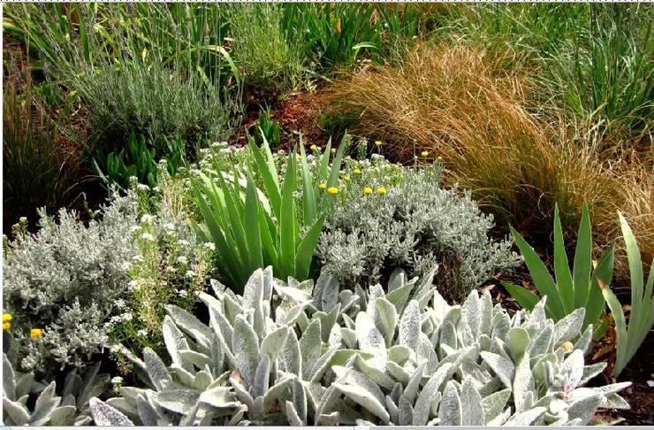 Prairie Style Front Garden: modern Garden by Young Landscape Design Studio