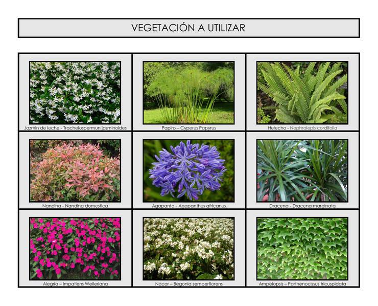 Jardín Los Papiros: Jardines de estilo  por Dhena CONSTRUCCION DE JARDINES,