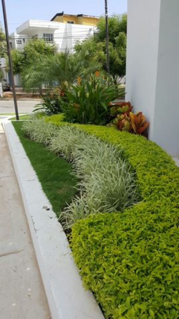 SALA DE VENTAS - MADEIRA APTOS. - BARRANQUILLA - COLOMBIA: Jardines de estilo  por BRASSICA SOLUCIONES PAISAJISTICAS S.A.S., Tropical