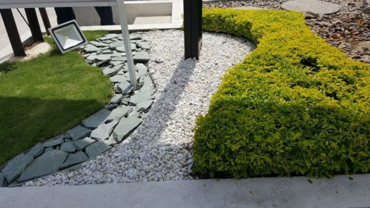 SALA DE VENTAS – MADEIRA APTOS. – BARRANQUILLA – COLOMBIA: Jardines de estilo  por BRASSICA SOLUCIONES PAISAJISTICAS S.A.S., Tropical