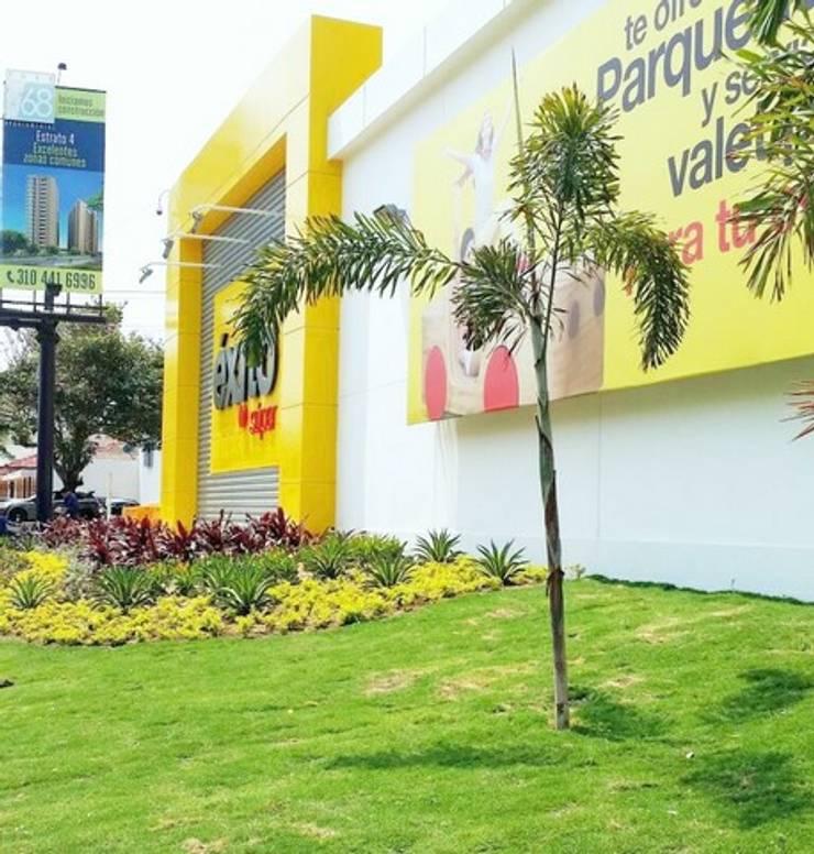 Jardines de estilo tropical de BRASSICA SOLUCIONES PAISAJISTICAS S.A.S. Tropical