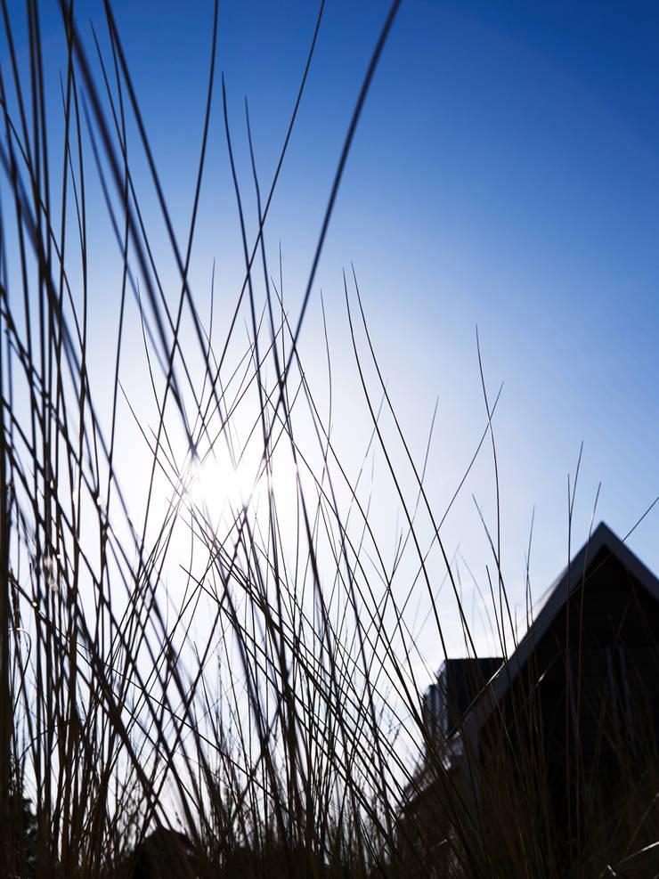BEACH HOUSE:  Tuin door J.PHINE