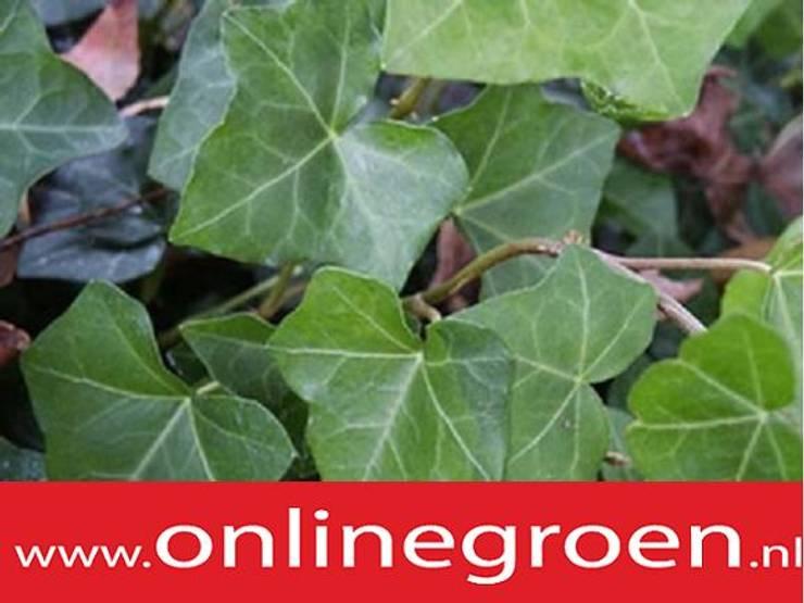 Planten voor bodem onlinegroen:   door onlinegroen