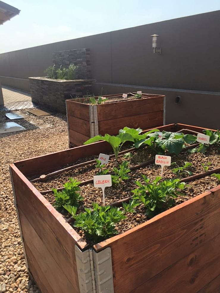 Organic Kitchen Garden with recycled wood planters:  Garden by Acton Gardens, Country Wood Wood effect