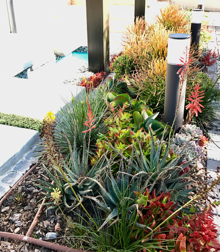 Vibrant water wise planting:  Garden by Acton Gardens