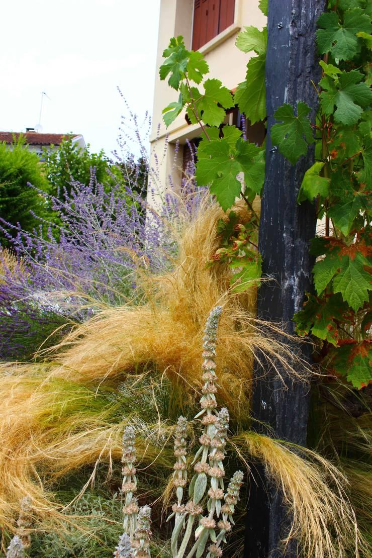 Vigne, stipa et perovskia Jardin moderne par Constans Paysage Moderne
