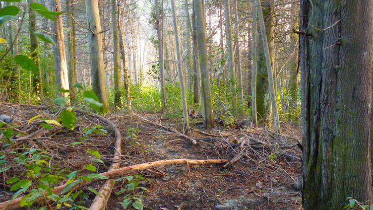 Relevamiento del bosque: Jardines de estilo  por Pell Paisajismo,