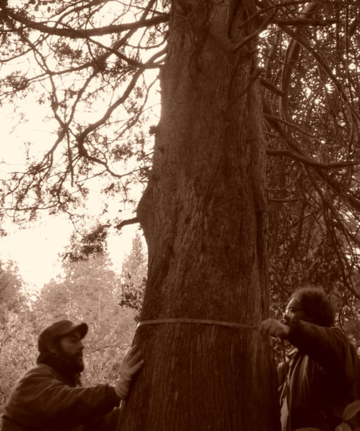 Medición del bosque nativo: Jardines de estilo  por Pell Paisajismo,