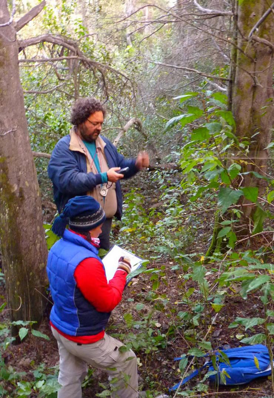 Relevando los parámetros del bosque: Jardines de estilo  por Pell Paisajismo,