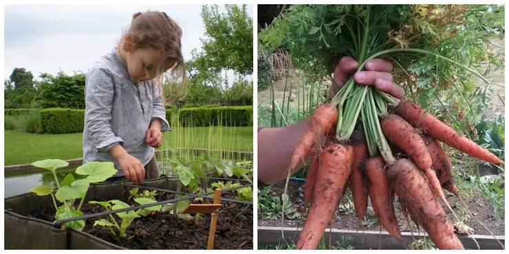 Jardines de estilo rural por homify