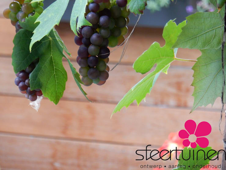 Druivenranken vanaf het ochtend terras:  Balkon, veranda & terras door Sfeertuinen