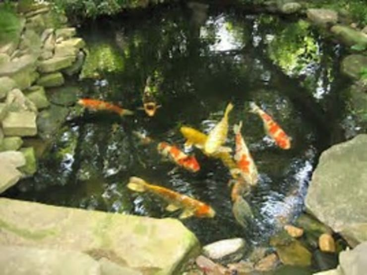 """Koi pond project.: {:asian=>""""asian"""", :classic=>""""classic"""", :colonial=>""""colonial"""", :country=>""""country"""", :eclectic=>""""eclectic"""", :industrial=>""""industrial"""", :mediterranean=>""""mediterranean"""", :minimalist=>""""minimalist"""", :modern=>""""modern"""", :rustic=>""""rustic"""", :scandinavian=>""""scandinavian"""", :tropical=>""""tropical""""}  by Landscaping Johannesburg,"""