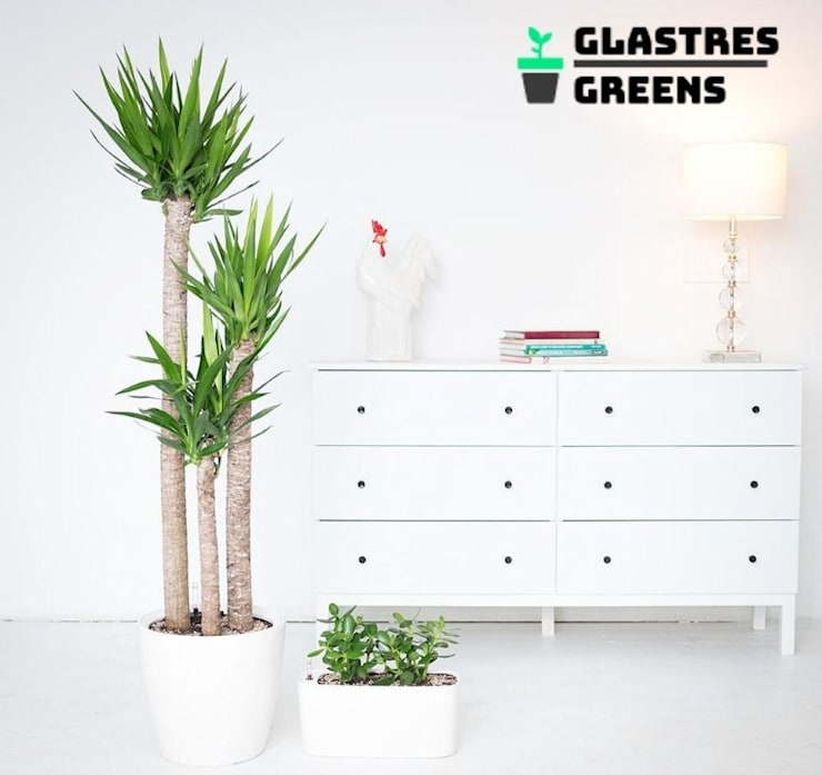 Glastres Greens:  Front yard by Glastres Greens,Asian