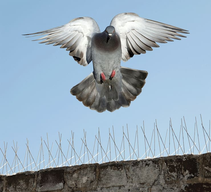 Commercial Bird Proofing:   by Pest Control Pretoria