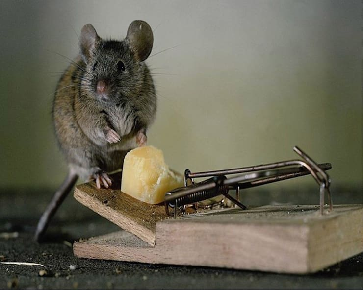 Eco-friendly Rodent Control Methods:   by Pest Control Pretoria