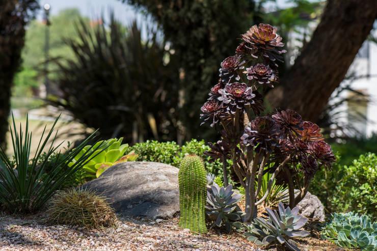 Jardines de estilo  por Mexikan Curious