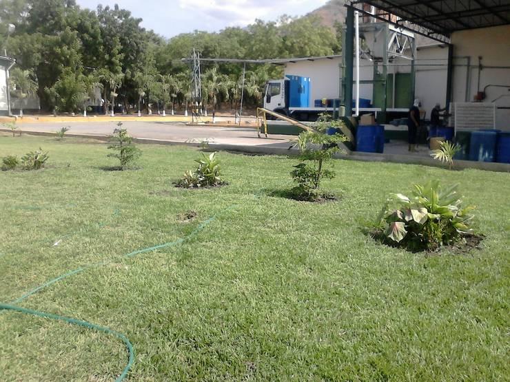 Plantas para decorar jardines: Jardines de estilo  por Vida Verde