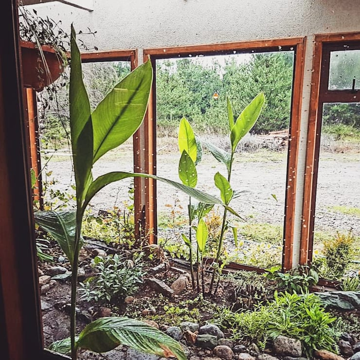 Interior Jardin: Jardines de invierno de estilo  por casa rural - Arquitectos en Coyhaique