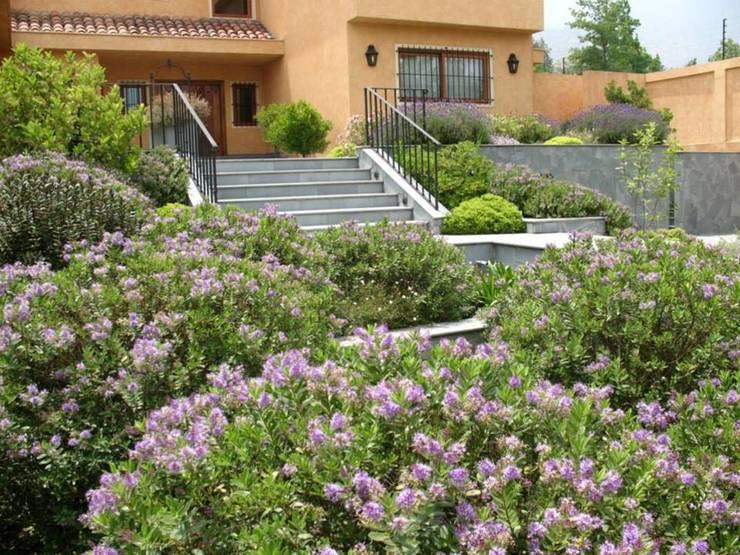 Veronicas buxifolias que dan color al antejardín.: Jardines de estilo  por Aliwen Paisajismo