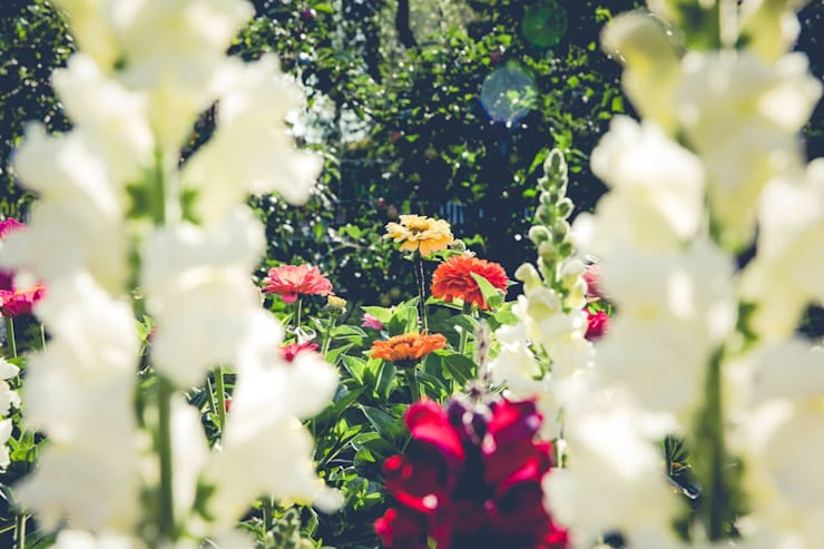 Flowers:  Front yard by Smth Co