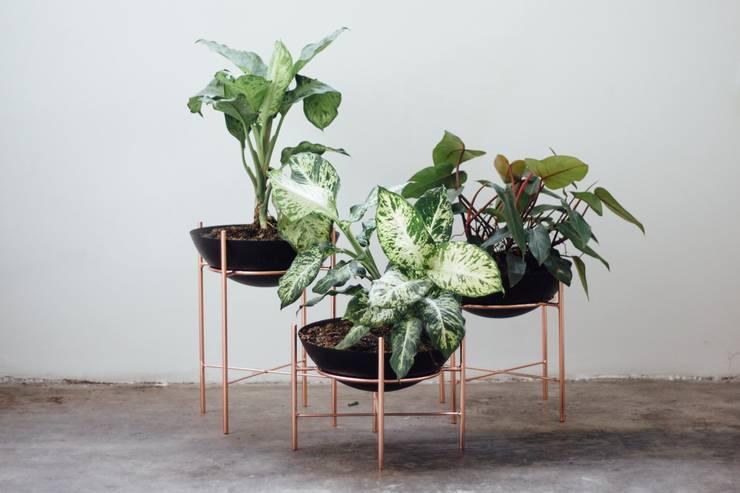 Maceta Amazonas pequeña: Jardín de estilo  por TopList